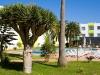 corralejo beach hotel swimming pool