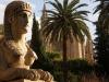 Palma Sphinx