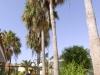 puerto-caleta-apartment-garden