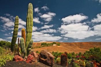 Oasis Fuerteventura Park
